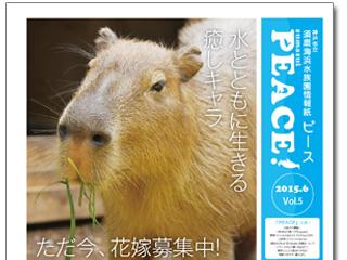 8912_kiji_3.jpg