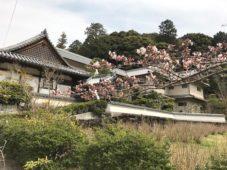 「大和で食す 春色精進料理」の会を開催|長弓寺薬師院