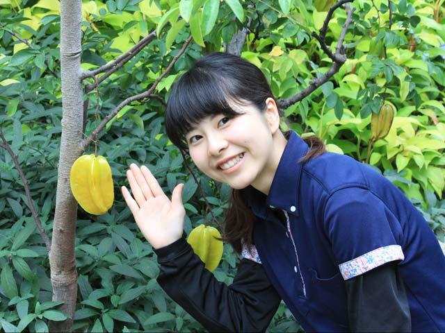 咲くやこの花館, フルーツ, 熱帯植物,体験,大阪市, ゴールデンウィーク,GW