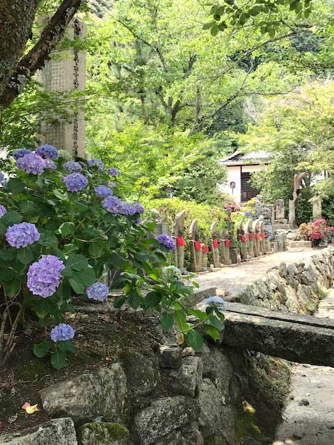 約60種類1万株のあじさいが咲き誇る 矢田寺 南僧坊にて 恒例のお食事会を開催