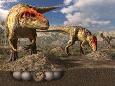 大阪市立自然史博物館「特別展 恐竜の卵~恐竜誕生に秘められた謎~鑑賞券」プレゼント