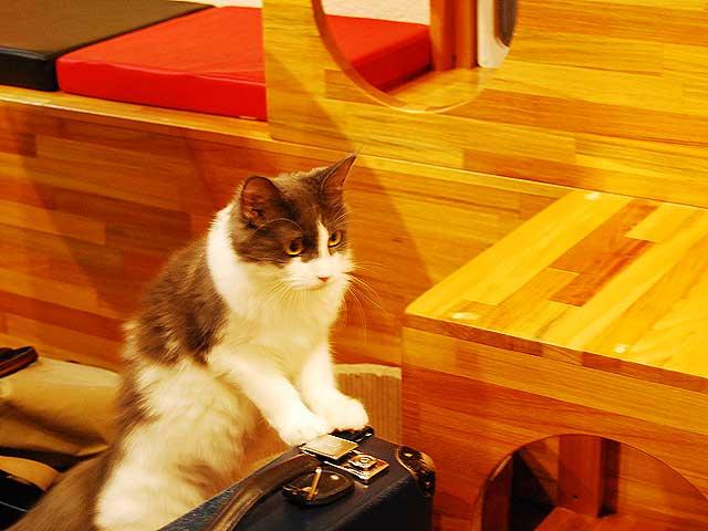 可愛すぎて時間を忘れそう…美猫ぞろいの奈良の猫カフェ「心猫」