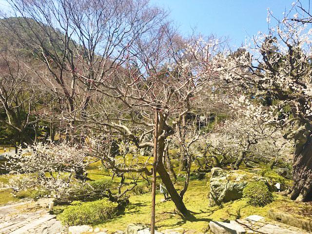 京都の春を小旅行気分で体感 しょうざんリゾート京都
