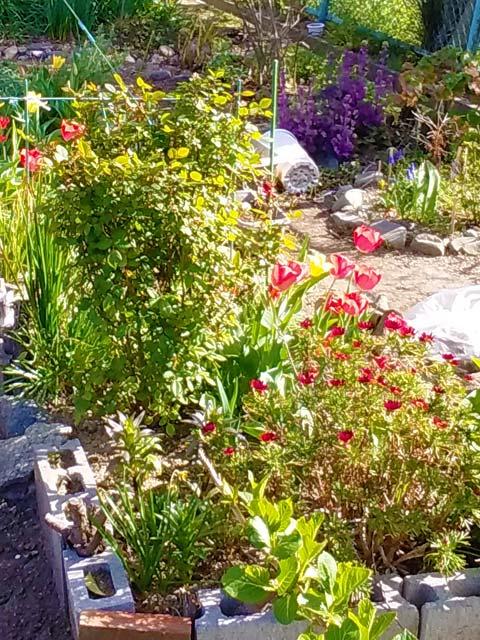 四季を通じて花を楽しめるように 遊歩道に花壇