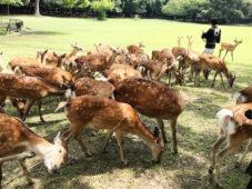 圧巻の鹿寄せと格式の宿・四季亭の特別料理を37名様の読者が堪能