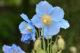 六甲高山植物園「入園券」(620円相当)5組10名様にプレゼント