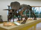明石市立文化博物館「夏季特別展『恐竜ワールド~生物進化の大冒険~』鑑賞券」(800円相当)10組20名様にプレゼント