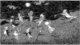 練馬区立美術館「『エドワード・ゴーリーの優雅な秘密』鑑賞券」(1,000円相当)5組10名様にプレゼント
