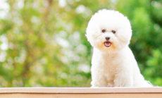 愛犬のためのオンラインアロマレッスン 春の受講キャンペーン!